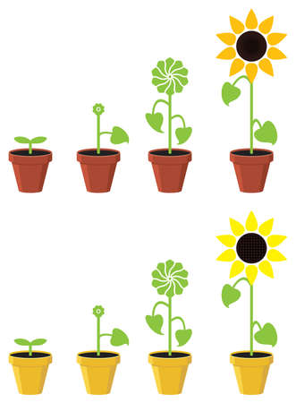 life green: vector sunflower plant growth stages concept