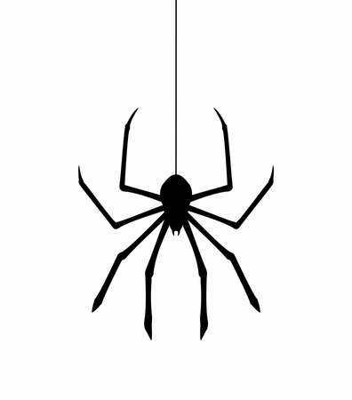 black and white spiders: vector hanging spider on web thread
