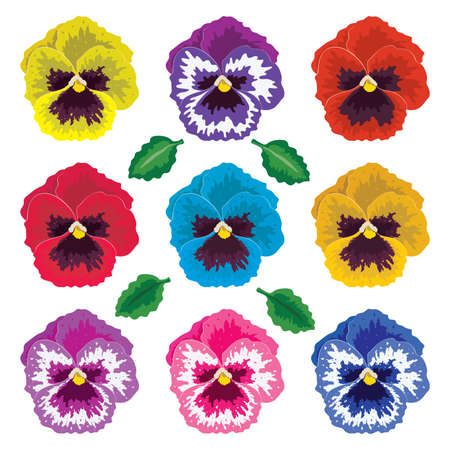 collection of pansy flowers and leaves Illustration