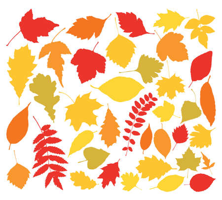 silhouettes of autumn leaves Illustration