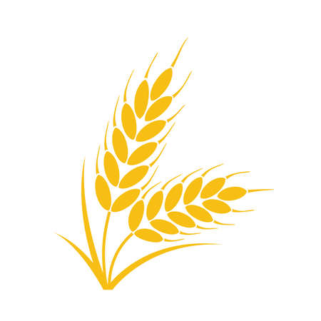 vector bunch of wheat or rye ears with whole grain and leaves, yellow crop harvest symbol
