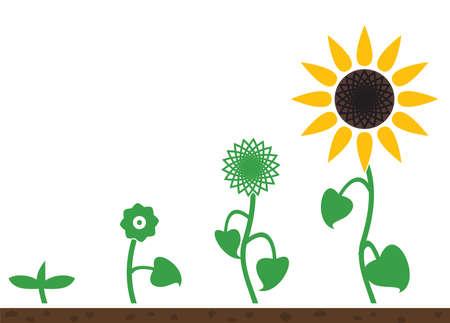 ひまわりの植物生育  イラスト・ベクター素材