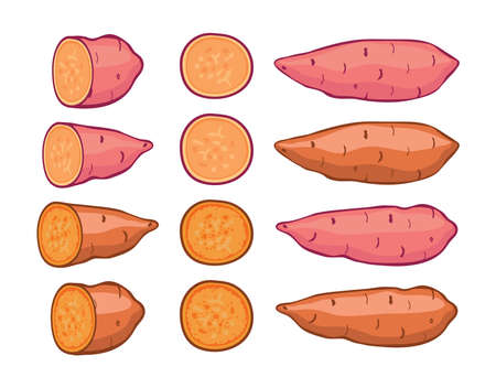 vector sweet potatoes set isolated on white background. raw batatas potato slices. healthy organic food, vegetable agriculture.