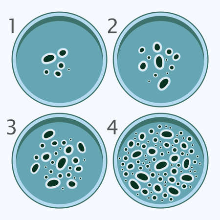 vector bacteria growth stages. bacterium in petri dishes isolated on white background.