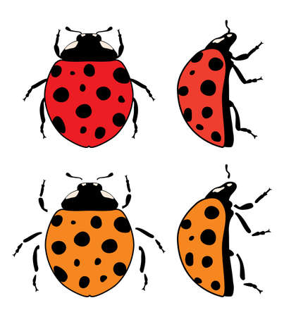 vector ladybird flat symbols isolated on white background. design elements of dotted lady bugs. red and orange ladybug icons Illustration