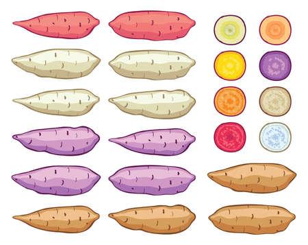 Vector set de patates douces isolé sur fond blanc. batatas crus de pommes de terre entières et des tranches. aliments biologiques sains, agriculture maraîchère.
