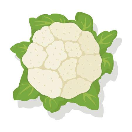 chou de chou-fleur de légumes de vecteur isolé sur fond blanc. icône de nourriture végétarienne saine. tête entière de chou-fleur cru avec des feuilles pour les illustrations de récolte. eps10