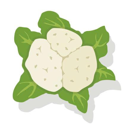 Chou chou-fleur végétal isolé sur blanc Vecteurs