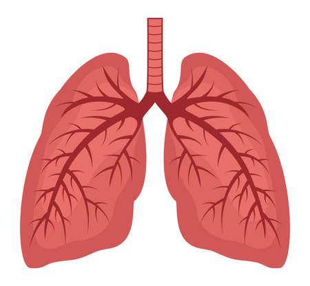 vector human lungs flat icon isolated on white background. lung organ anatomy symbol for health and medical illustrations