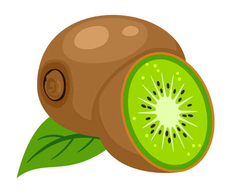 vector illustration of whole kiwi fruit, leaf and a kiwi fruit cut isolated on white background. icon of kiwifruit and slice with seeds