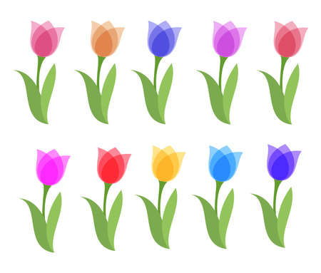 vector set of colorful tulip graphic drawings isolated on white background. beautiful tulips for decorative design. flat graphic style. spring tulips text. eps10 illustration