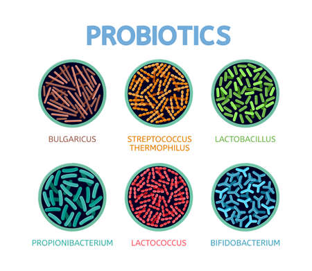 vector abstract bacteriology icons isolated on white background. bulgaricus, streptococcus thermophilus, lactobacillus, propionibacterium, lactococcus and bifidobacterium symbols, medical background