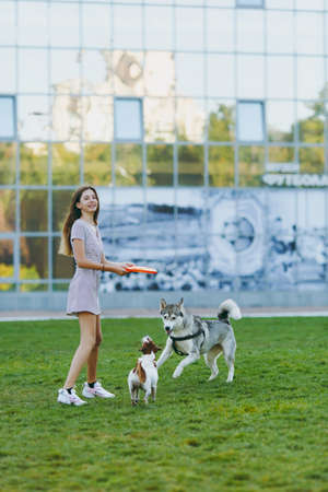 Young girl throwing orange flying disk to small funny dog, which playing with husky on the grass. Little Jack Russel Terrier and Eskimo dog pet playing outdoors in park. Dog and owner on open air