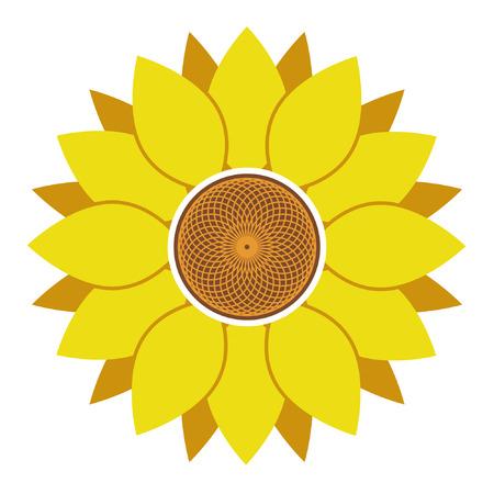 Sunflower vector illustration, sunflower isolated on white background Standard-Bild - 122617119
