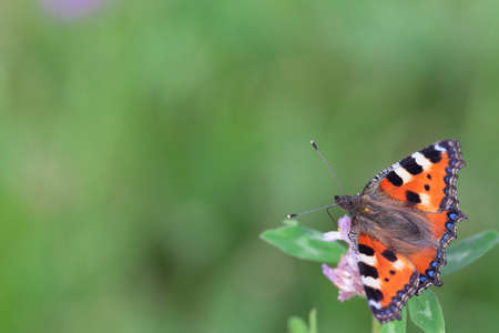 Orange butterfly on a flower on a warm day