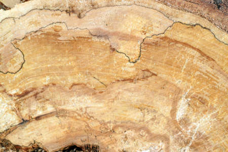 Pine burl wood in the section Stock Photo