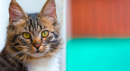 Beuaty, nice brown kitten with green eyes, long haired Foto de archivo