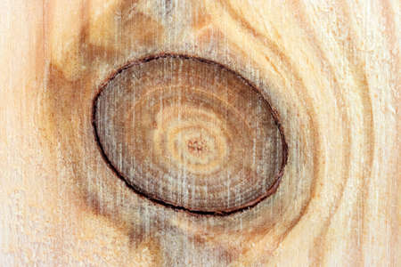 Pine Board with a knot. The structure of the tree cut close-up Foto de archivo