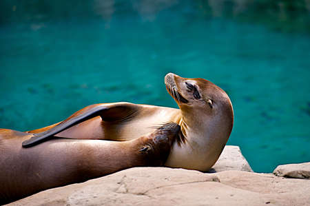 Two seals cuddling.