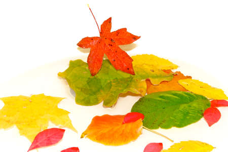 Colorful autumn leaves floating in water