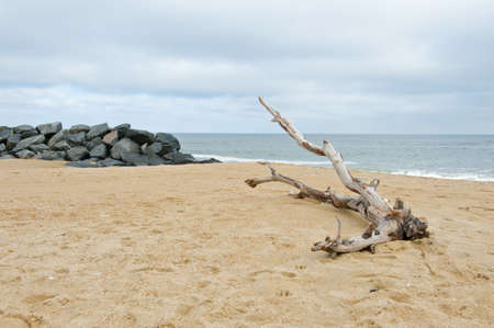 Drift wood laying in the sand on the beach.