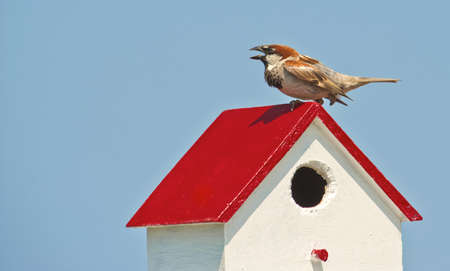 Wild finch standing on birdhouse at Tangier Island.