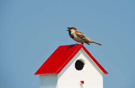Wild bird standing on birdhouse at Tangier Island. Stock Photo