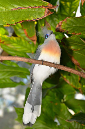 Beautiful colorful bird perched on a branch. Stock Photo