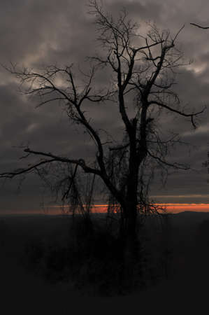 Silhouette of a tree at sunset in Virginia.