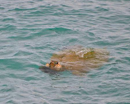 tumors: Endangered sea turtle with viral tumors