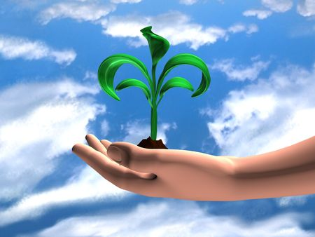 a human hand holding a young plant