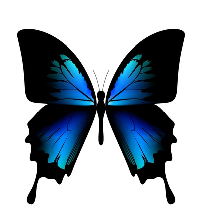 descriptive colours: butterfly on the white background