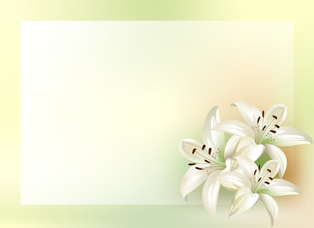 lily buds: bouquet of lilies with place for your text