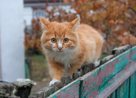 Tiny red kitten outdoors portrait photo
