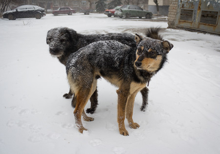 Hungry stray dog during a snowstorm photo