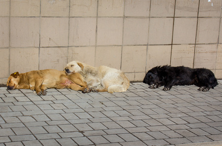 bask: Stray dogs bask in the sun Stock Photo