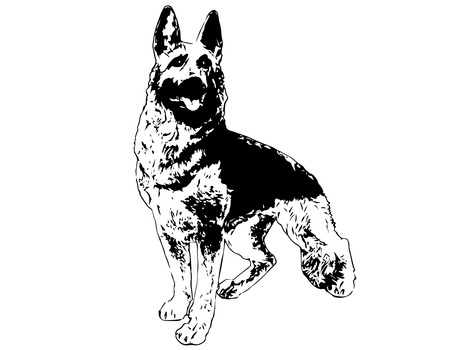 dog outline: German shepherd. Vector illustration