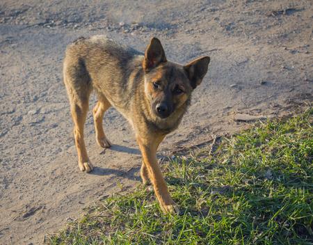 stray: Young stray dog