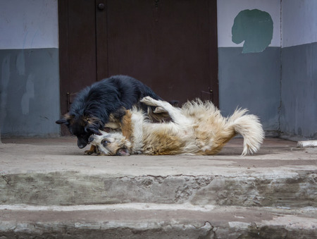 stray: Two stray dogs fighting