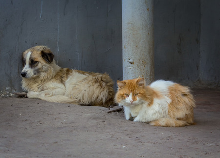 squint: Homeless comrades, cat and dog