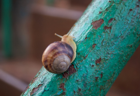 metal handrail: lonely snail crawling on rusty metal handrail Stock Photo