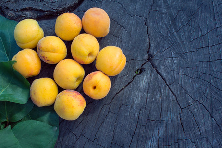 truncated: Orange apricot on a cracked stump