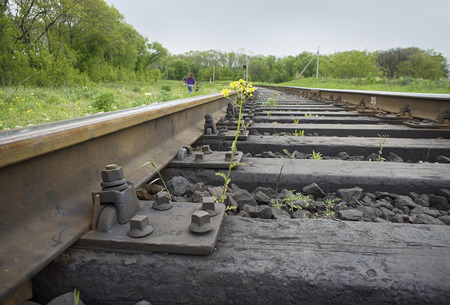 viable: Flower sprouting between railway sleepers Stock Photo