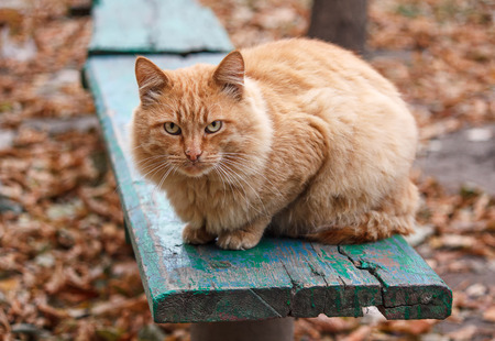 severe: Severe ginger cat sitting on a bench