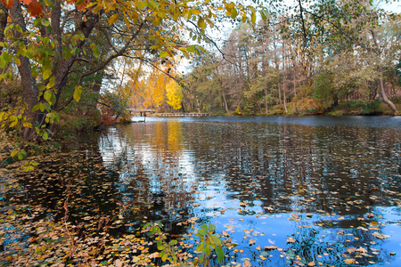 pond: Pond in a colorful autumn park. Nature