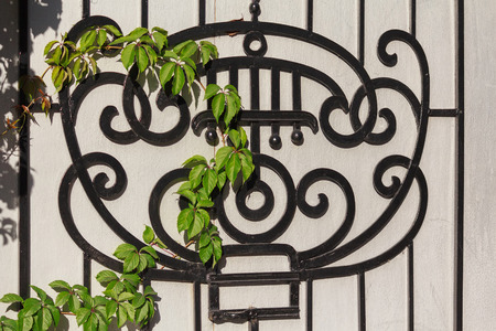 grille': Black wrought-iron grille and ivy branch. Architecture