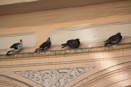 ledge: Pigeons sitting on the ledge of an old building. Birds Stock Photo