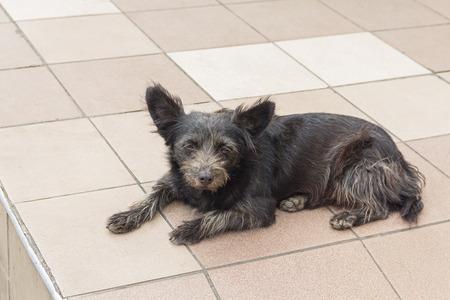 miserable: Homeless miserable dog lying on the floor. Pets