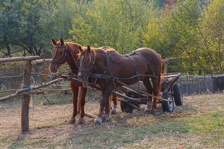 horse traction: Horses harnessed to a cart on the farm. Animals Stock Photo