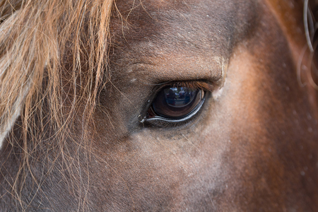 waiting glance: Eye thoroughbred brown horse close up. Animals